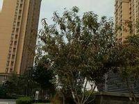 东营区东城中南世纪锦城9楼,豪华装修,带车位