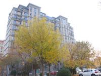 天昊梅园4楼158平3室精装修带地下室170万