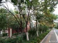 东城金鸿花园3楼 面积142平车库24平 地下室13平 138万 精装未住
