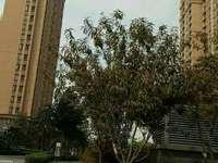 东营区东城中南世纪锦城22楼,赠送10平,地下室16平